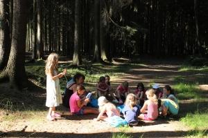 Ekologie (ekologicky v lese)